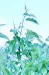 DSC_0044-001